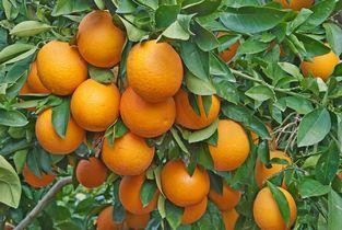 Aromaterapia - laranjas