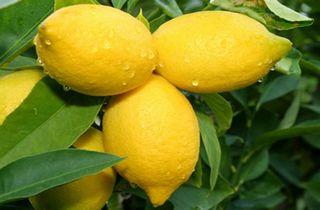 Aromaterapia - limão