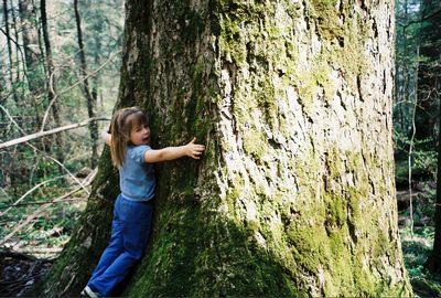 abraçar uma árvore